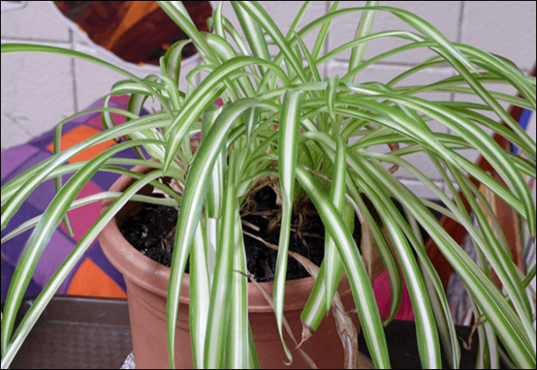 Improve Air Quality at Work Place by using plants